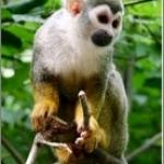 Kinder übernahmen Affen-Patenschaft